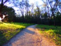 Uma caminhada nas madeiras Fotografia de Stock