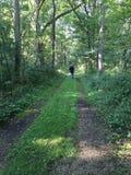 Uma caminhada nas madeiras Imagem de Stock Royalty Free