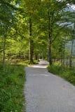 Uma caminhada nas madeiras pelo lago fotografia de stock