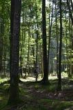 Uma caminhada nas madeiras pelo lago imagens de stock