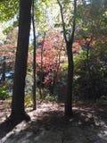 Uma caminhada no parque Imagem de Stock Royalty Free