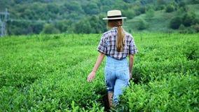 Uma caminhada ou um jogo da menina na exploração agrícola do chá, foco seletivo, elogio acima, fresco vídeos de arquivo