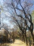 Uma caminhada a recordar em algum lugar, parque em Barcelona spain fotografia de stock royalty free