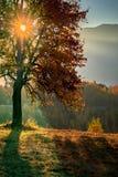 Uma carícia do raio do sol uma árvore fotos de stock royalty free