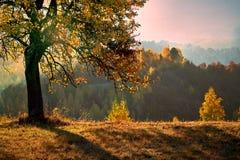 Uma carícia do raio do sol uma árvore foto de stock royalty free