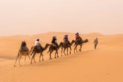 Uma caravana dos camelos que andam através do deserto de Sahara marroquino Foto de Stock Royalty Free