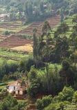 Uma casa com campo da plantação de chá Imagem de Stock