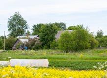 Uma casa e um campo em uma vila do russo no verão foto de stock royalty free