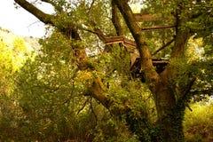 Uma casa na árvore destruída por uma tempestade imagens de stock