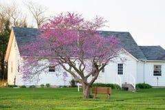 Uma casa vermelha de Bud Tree Blooming e da exploração agrícola fotos de stock