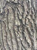Uma casca da árvore Fotos de Stock