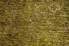 Uma casca da faia Fotografia de Stock