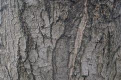 Uma casca de árvore velha Fotografia de Stock