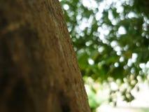 Uma casca de madeira Imagem de Stock