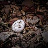 Uma casca de ovo em um montão do adubo Fotografia de Stock Royalty Free