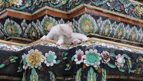 Uma Cat Relaxation On Ancient Colorful branca Stupa decorado com cerâmico vídeos de arquivo