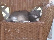Uma Cat Sleeping na cadeira do Rattan Imagens de Stock Royalty Free
