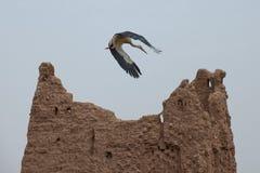 Uma cegonha em Ait Ben Haddou Imagem de Stock