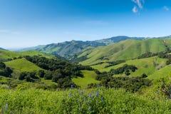 Uma cena bonita da mola/verão com os wildflowers lupine azuis e uma paisagem vasta de campos verdes luxúrias, de montes, e de mon fotografia de stock royalty free