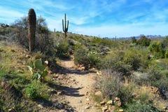 Uma cena bonita do deserto Fotos de Stock Royalty Free