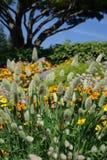 Uma cena calma do jardim Imagens de Stock Royalty Free