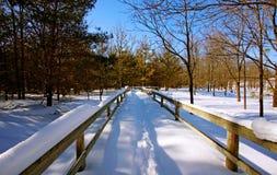 Uma cena da floresta do inverno Imagem de Stock