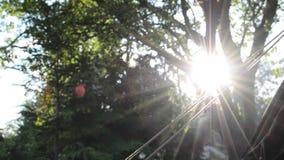 Uma cena de acampamento tranquilo, com fumo da fogueira nos sóis irradia através das árvores filme