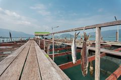 Uma cena de fazer o estilo salgado secado tailandês dos peixes na piscicultura foto de stock royalty free