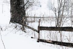 Uma cena nevado do inverno com neve de queda da região Carpathian, Ucrânia, Europa Imagem de Stock Royalty Free