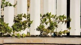 Uma cerca branca e folhas do verde Foto de Stock