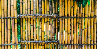 uma cerca de bambu imagens de stock royalty free