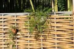 Uma cerca do bambu Fotos de Stock