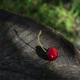 Uma cereja doce em uma superfície de madeira em um raio de sol Imagens de Stock