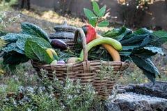 Uma cesta completamente do alimento biológico do campo imagens de stock royalty free