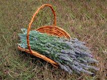 Uma cesta da alfazema Foto de Stock