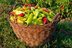 Uma cesta das paprika Fotos de Stock Royalty Free