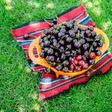 Uma cesta de cerejas doces maduras na grama verde Sobremesa deliciosa do verão generoso Grande, cereja vermelha, doce no jardim u fotos de stock royalty free