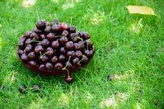 Uma cesta de cerejas doces maduras nos raios de luz solar na grama verde Sobremesa deliciosa do verão generoso foto de stock