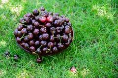Uma cesta de cerejas doces maduras nos raios de luz solar na grama verde Sobremesa deliciosa do ver?o generoso imagens de stock