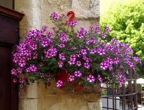 Uma cesta de flores cor-de-rosa brilhantes foto de stock royalty free