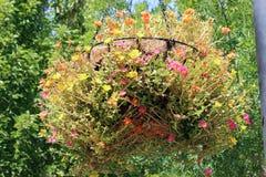Uma cesta de suspensão das flores Imagem de Stock Royalty Free