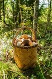 Uma cesta dos cogumelos Fotografia de Stock
