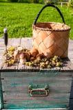 Uma cesta dos cogumelos Imagem de Stock