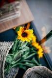 Uma cesta dos girassóis em detalhe fotografia de stock