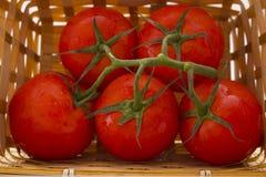 Uma cesta dos tomates com um ramo Fotos de Stock