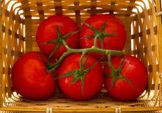Uma cesta dos tomates com um ramo Fotografia de Stock Royalty Free