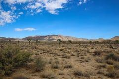 Uma coisa da beleza do deserto foto de stock royalty free