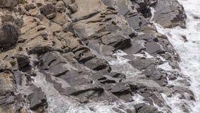 Uma colônia de leões de mar nas rochas da ilha do canguru, Austrália do sul imagem de stock