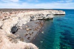 Os leões de mar aproximam Puerto Madryn, Argenina foto de stock royalty free