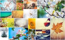 Uma colagem das fotografias é as estações Imagem de Stock